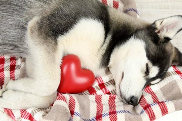 Сердечный кашель у собаки симптомы лечение