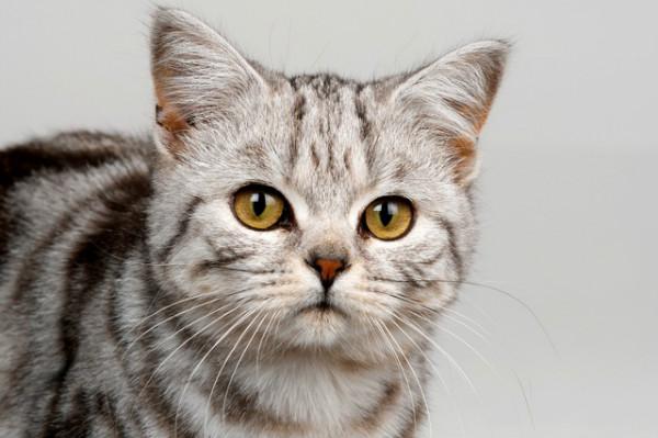 Лиарсин для кошек при хпн
