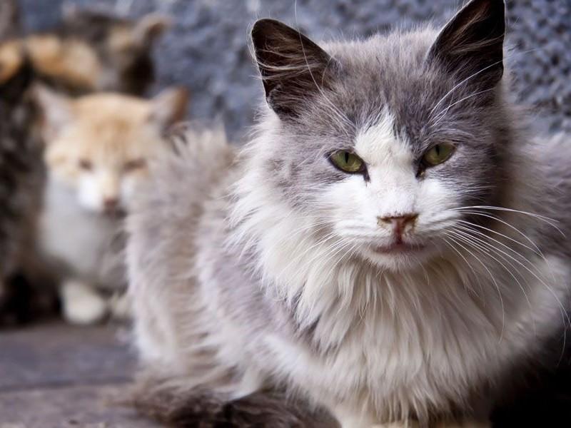 Заболевания спинного мозга у кошек