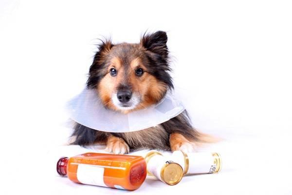 Дозировка бисептола при цистите у собак
