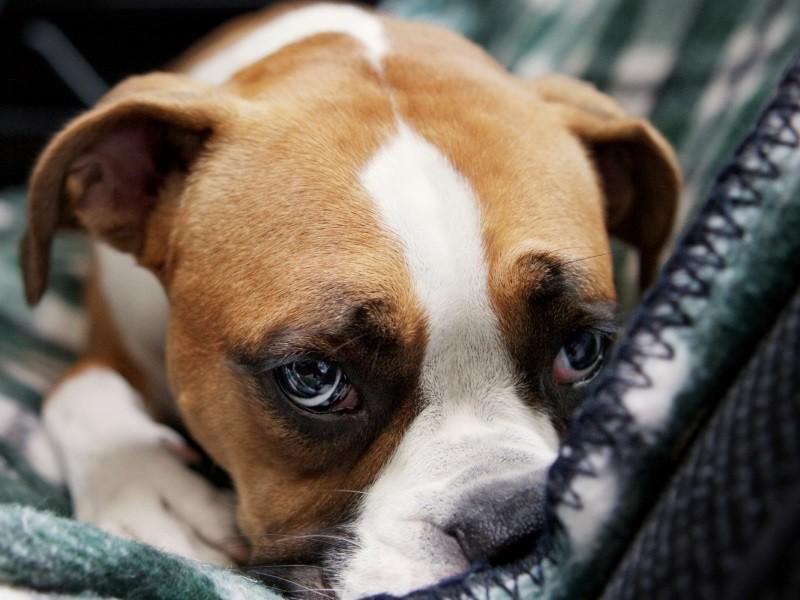 Почему у собаки в животе урчит