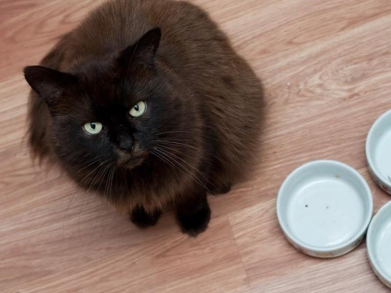 Почему Кот Не Ест И Похудел. Почему кот перестал есть: причины, что делать, если отказывается от еды