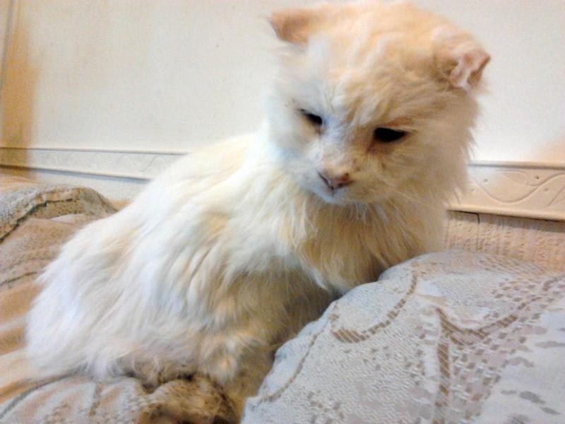 Почему кошка кашляет? Что делать, если она хрипит, как будто подавилась и вытягивает шею к полу?
