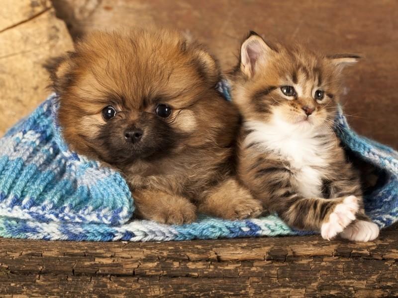 Рулем смешные, картинки пород собак и кошек