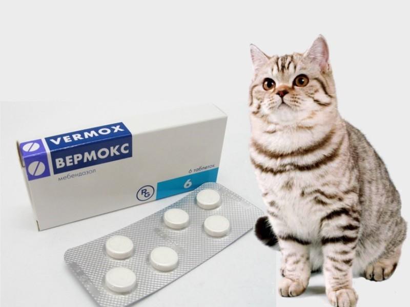 Как давать коту вермокс — Паразиты человека