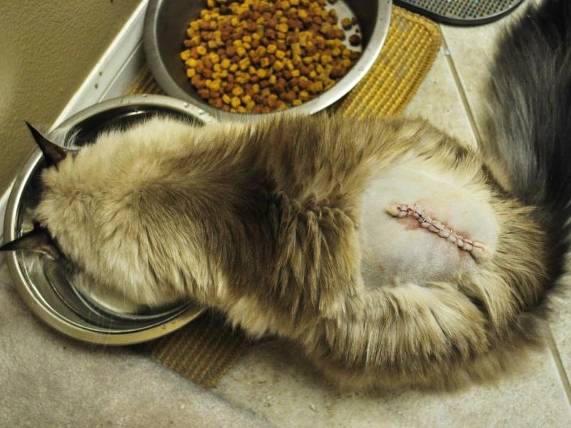 Что болит у кота если он выгибает спину
