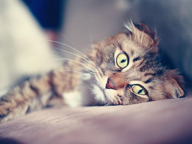 Депрессия у кошек: миф или реальность
