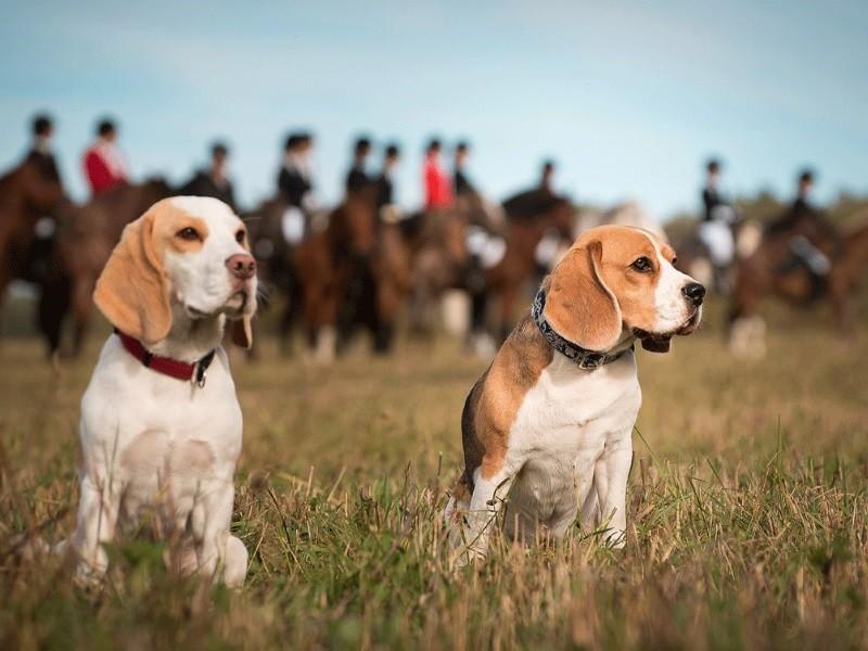 Породы гончих собак * русская и эстонская с фото