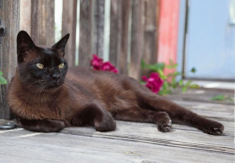 Паралич у кошек симптомы и лечение, причины из-за кишечника, как лечить после операции и что делать в домашних условиях