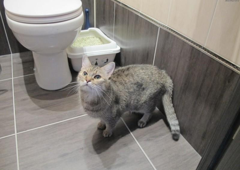 Почему кошка везде мочится