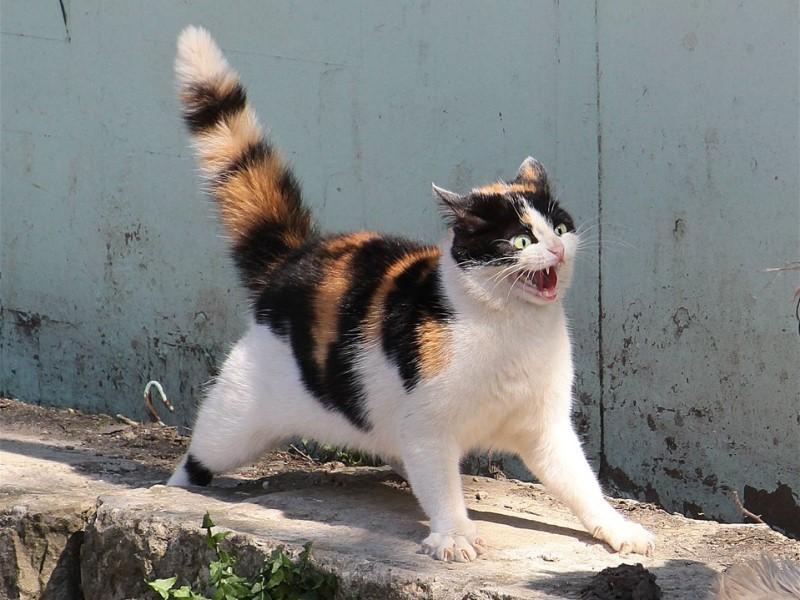 Почему кошки шипят на некоторых людей
