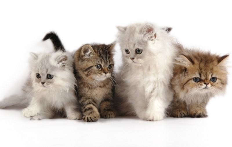 Как поиграть с котом дома – как играть с котенком?