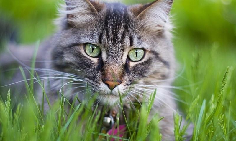 Метеоризм у кошек нежелательные продукты и способы лечения