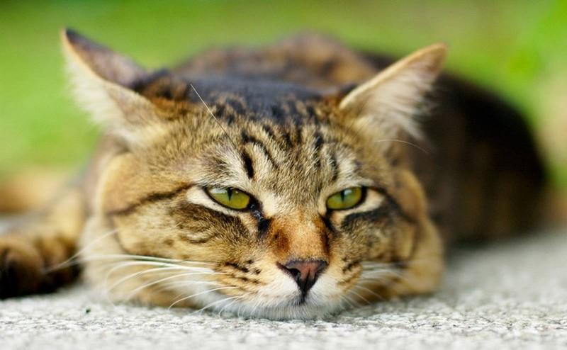 Почему кошка ездит на попе по ковру, почему кот катается по полу?
