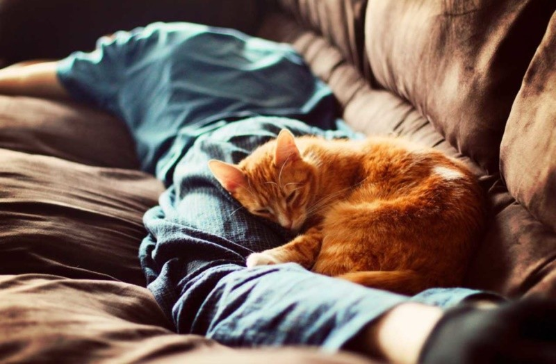 Почему кошка спит в ногах