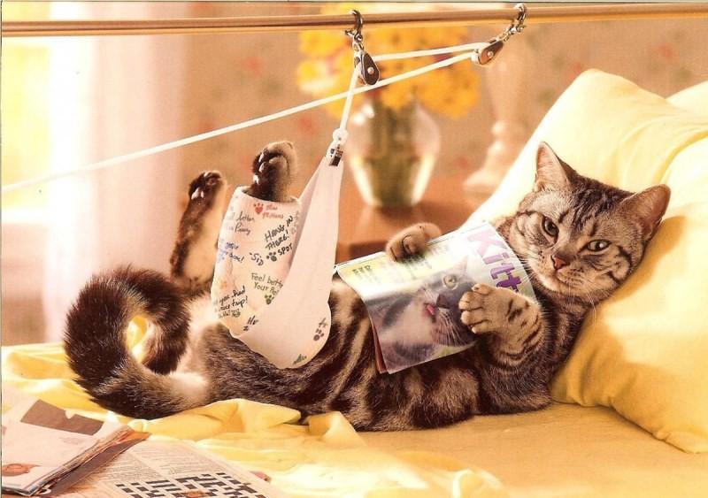 индивидуальными выздоравливай кошка картинки рассказывая биографии актера