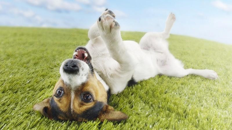 Почему собаки трутся об падаль