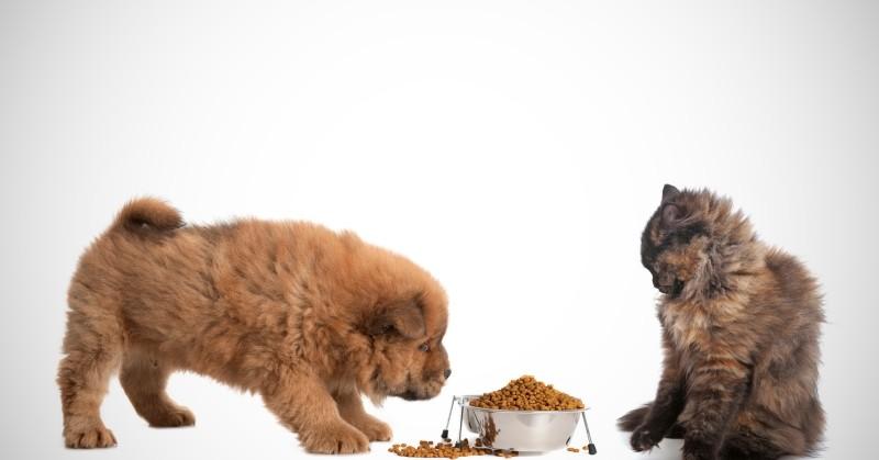 Можно ли кошкам давать собачий корм все что нужно знать владельцу