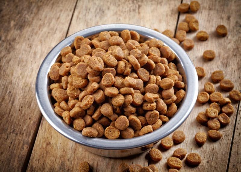 Можно ли кормить кошек собачьим кормом педигри thumbnail