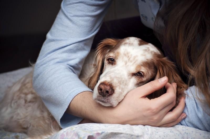 Воспаление простаты у кота клиническая картина заболевания и терапия