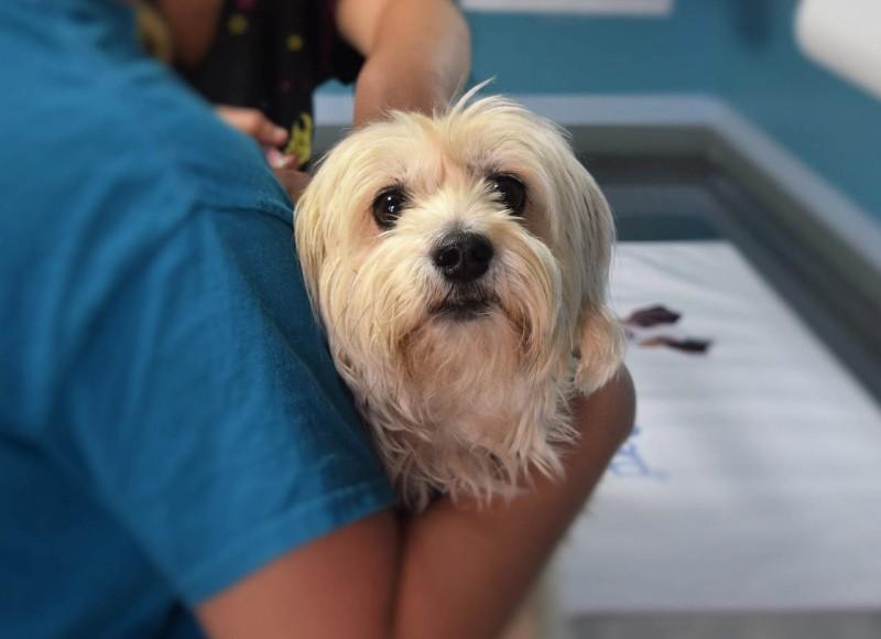 Дрожжевой дерматит у собак фото
