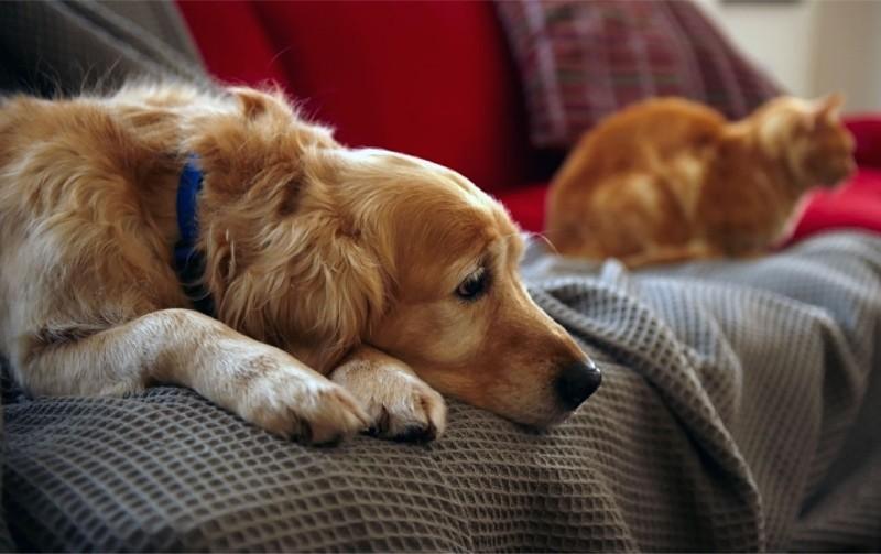 Болезни мочеполовой системы у собак