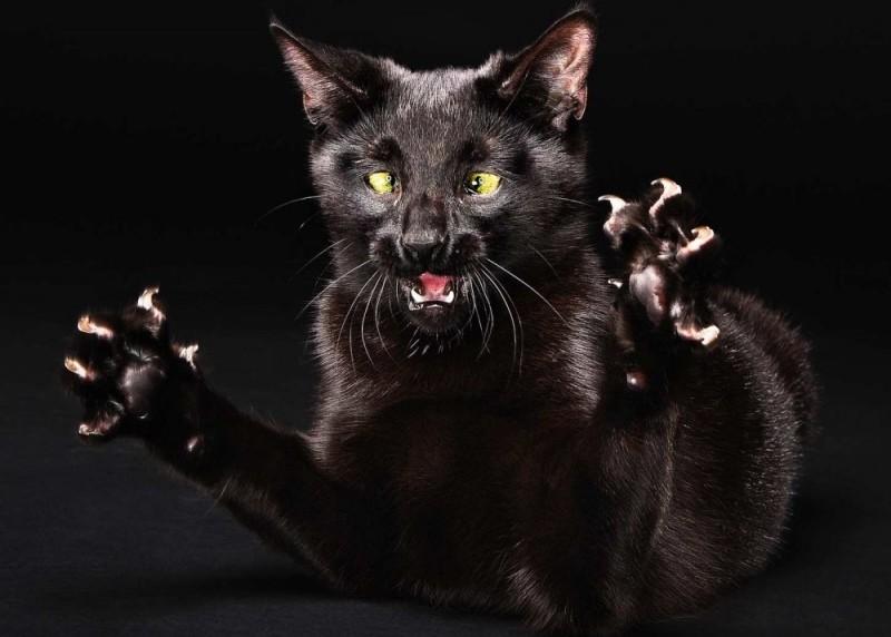 Что делать если кот очень агрессивный