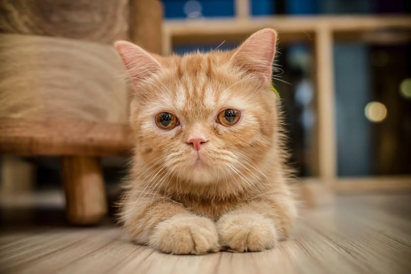 Бордетеллез у кошек симптомы и профилактика коварного заболевания