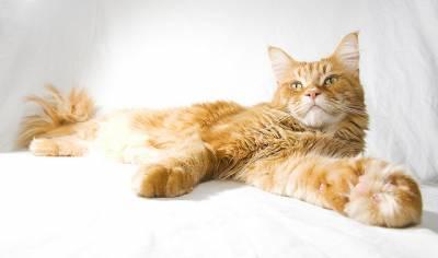 Белый кал у кошки причины и диагностические исследования возможных заболеваний