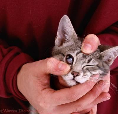 Третье веко у кошки: что это такое и почему возникает. Лечение третьего века у кошки - Автор Екатерина Данилова