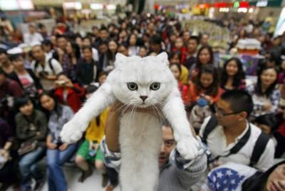 Выставка кошек: правила, подготовка и участие || Ваша первая выставка кошек