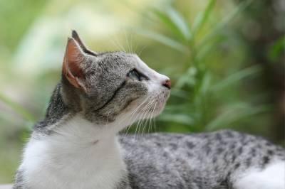 Грибок у кошек заразен для человека