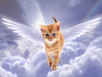 Есть ли у кошки душа