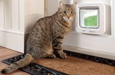Дверца для кошки в туалет и другие комнаты: как сделать своими руками