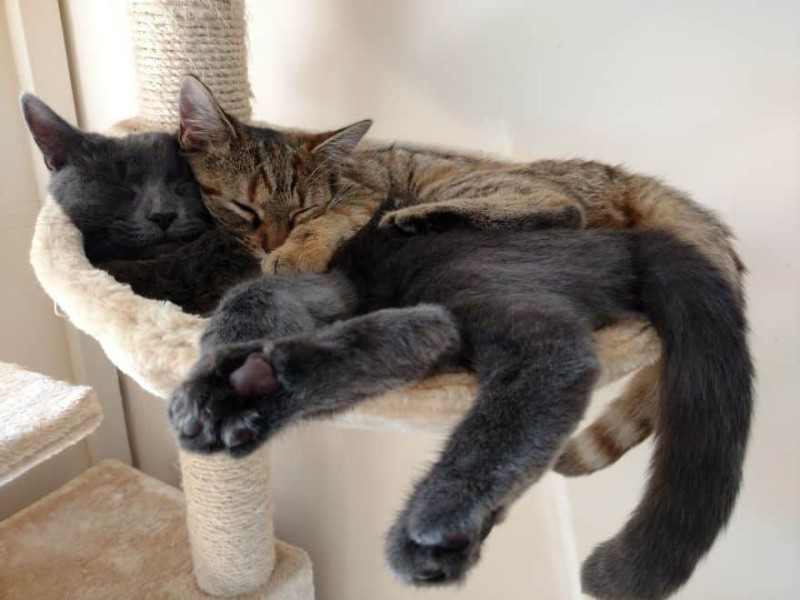 Почему во сне кошка стонет