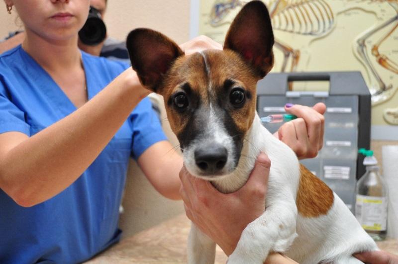 Шампунь для собак от себорейного дерматита