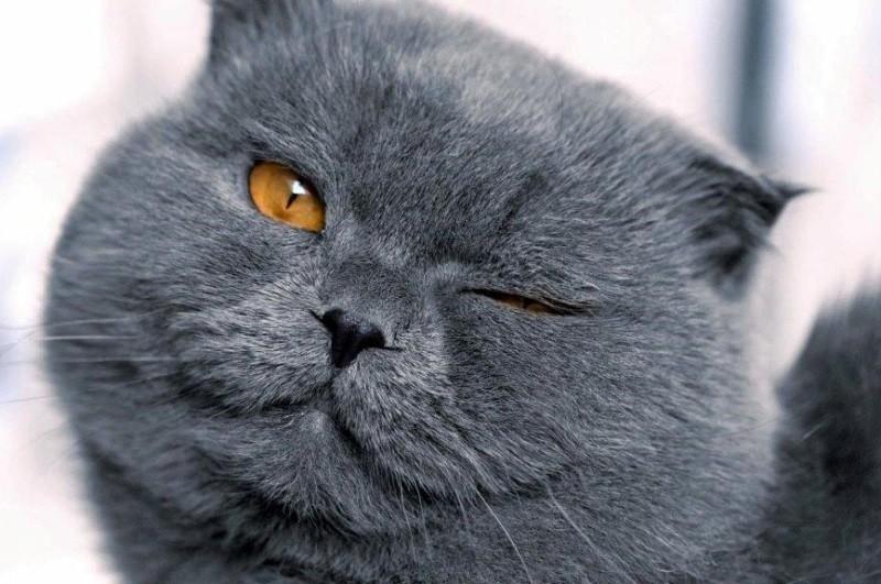Как возникает язва роговицы у кошки и насколько она опасна