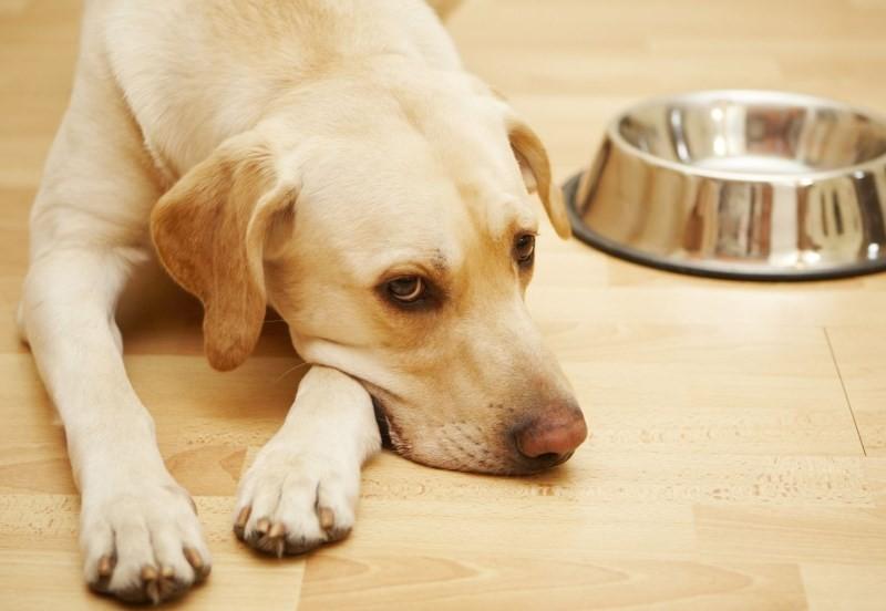 Собака отравилась едой что делать
