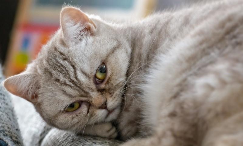 У кота белые плоские черви — Паразиты человека