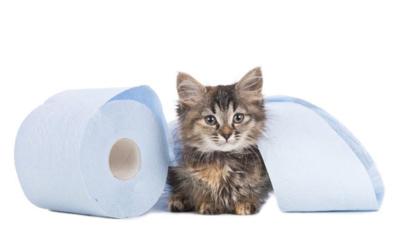 Чем вылечить понос у котенка