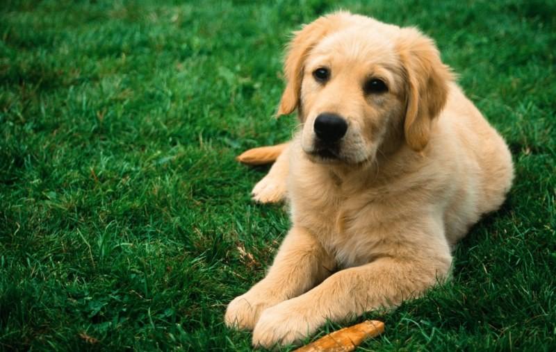Глисты у собак - симптомы и лечение
