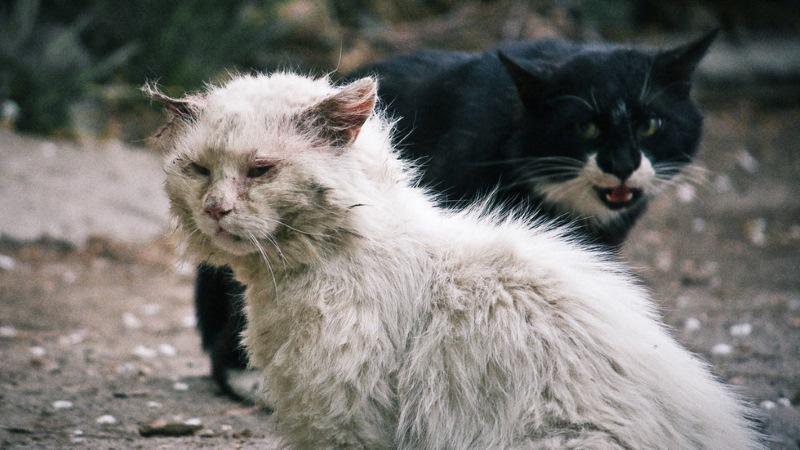Болезни кошек: виды, симптомы, лечение и профилактика