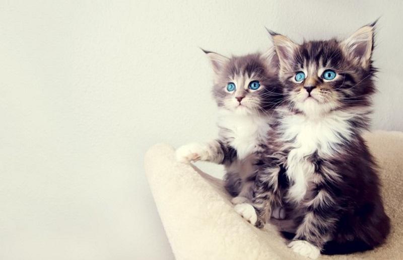 Корм для кошек при поносе