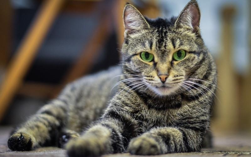 Лечение желудчно-кишечных заболеваний собак и кошек своими силами