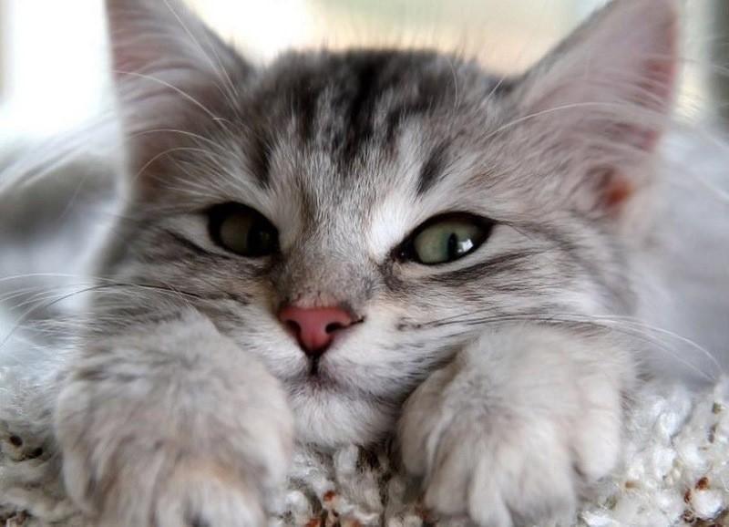 Какие глисты бывают у котят