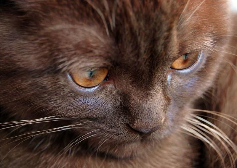 Менингоэнцефалит кошек - воспаление головного мозга кошек