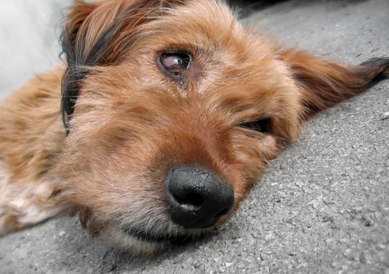 что делать если у собаки глисты