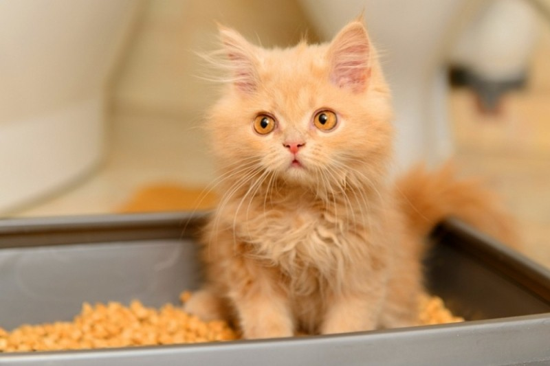 Понос у кота с кровью лечение