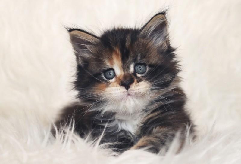 Чем кормить кота при поносе чтобы не навредить Чем кормить кота при поносе подбираем корм