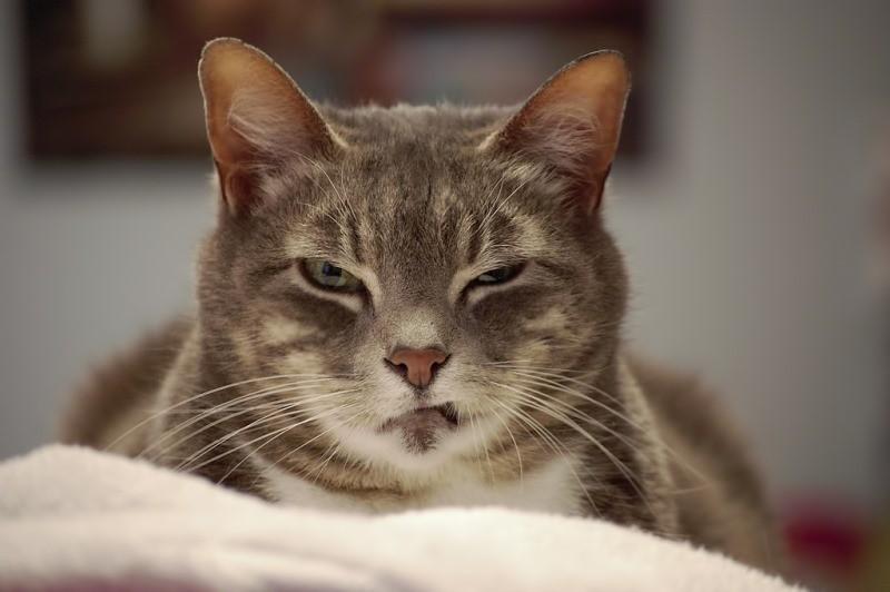 Жидкий стул у кошки после стерилизации в чем причина